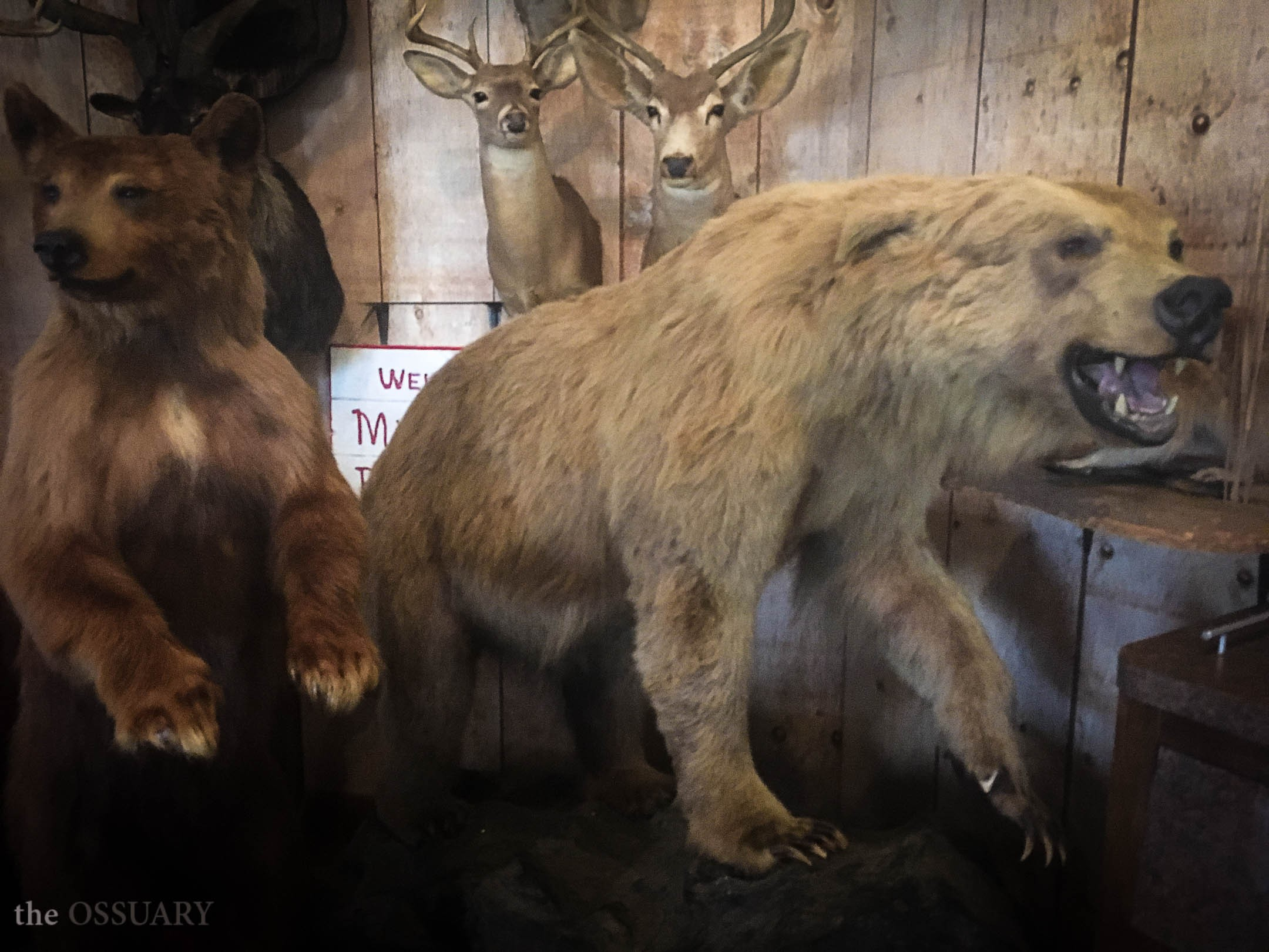 Taxidermy and Bar-B-Q