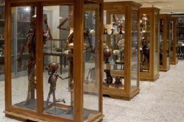 Museum of Human Anatomy