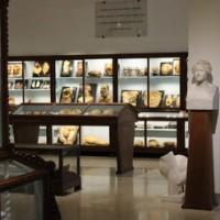 University of Florence Museum of Pathological Anatomy