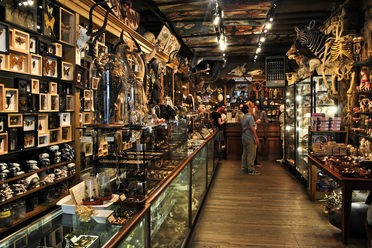 Evolution Nature Store