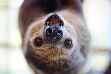 The Sloth Center